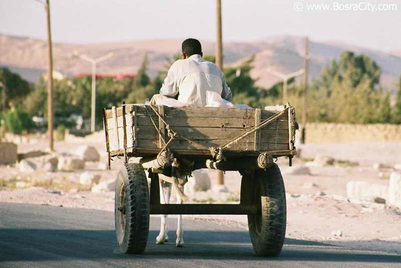 هذه سوريا المباركة Daily-life-061