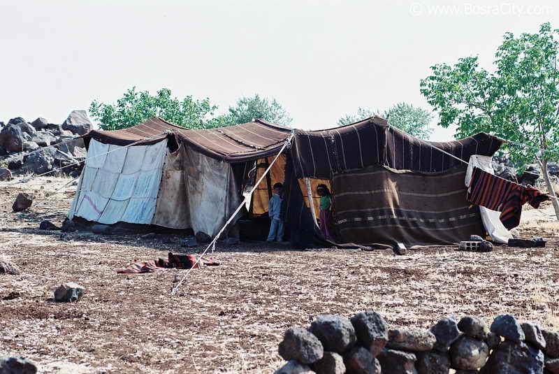 هذه سوريا المباركة Daily-life-090